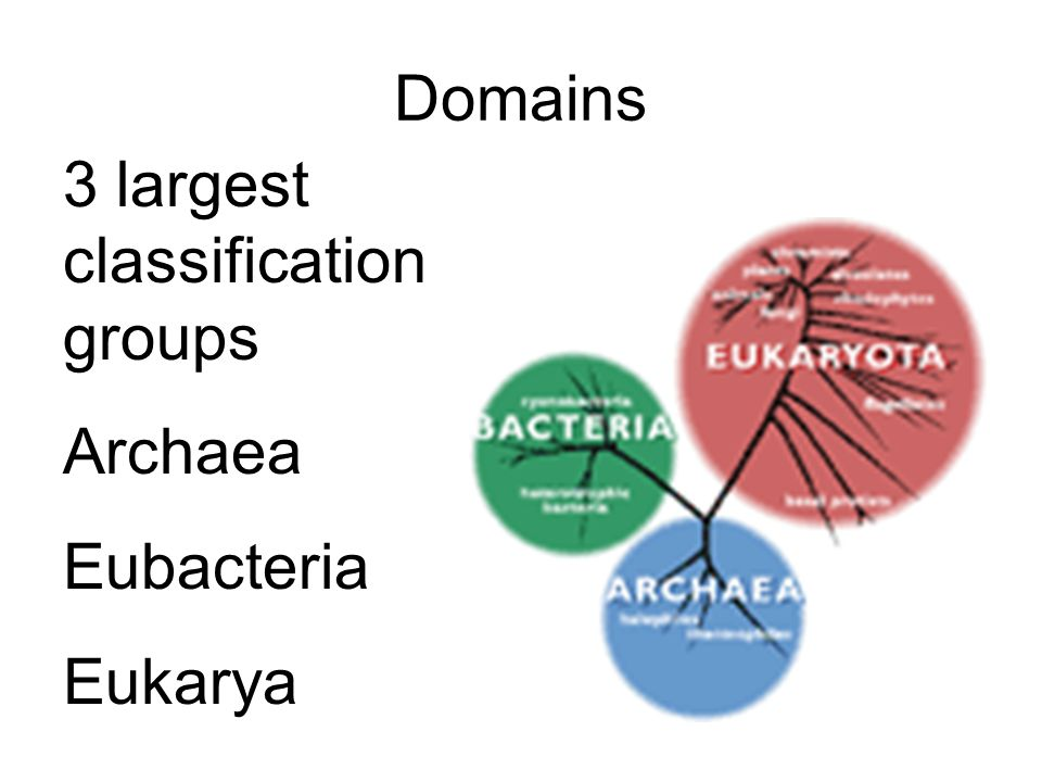 Domains 3 largest classification groups Archaea Eubacteria Eukarya