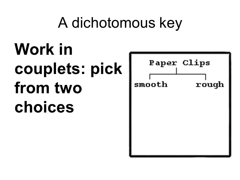 Work in couplets: pick from two choices