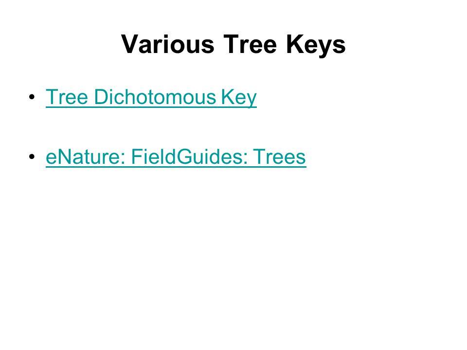 Various Tree Keys Tree Dichotomous Key eNature: FieldGuides: Trees
