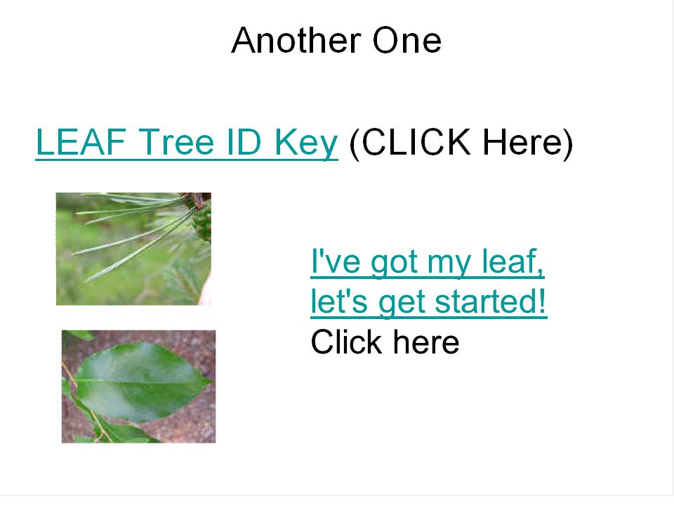 I ve got my leaf, let s get started! Click here