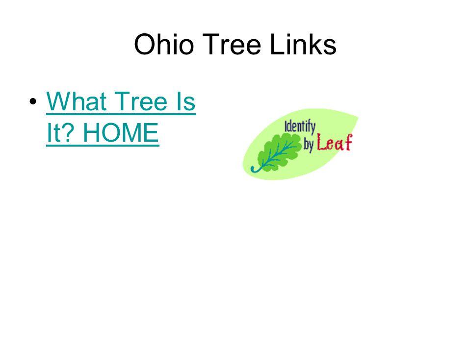 Ohio Tree Links What Tree Is It HOME
