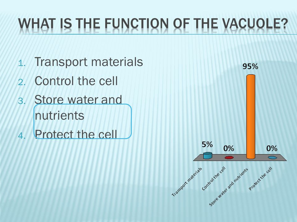 What is the function of the vacuole