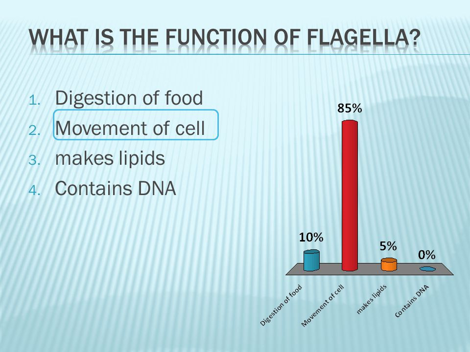 What is the function of flagella