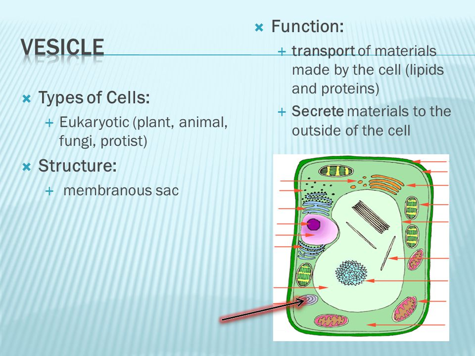 Vesicle Function: Types of Cells: Structure: