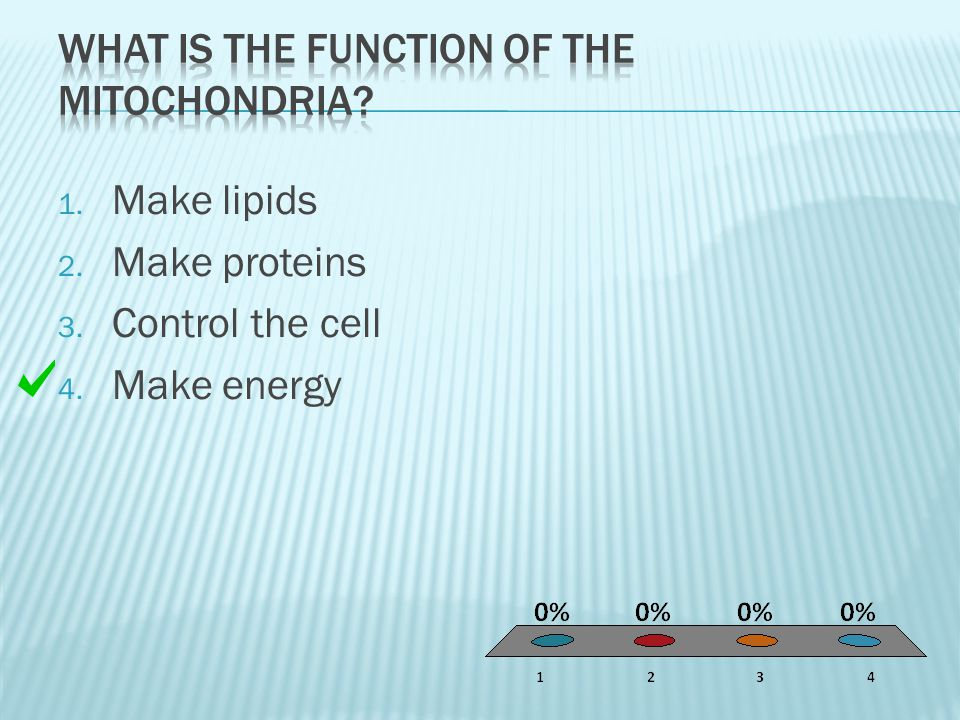 What is the function of the mitochondria