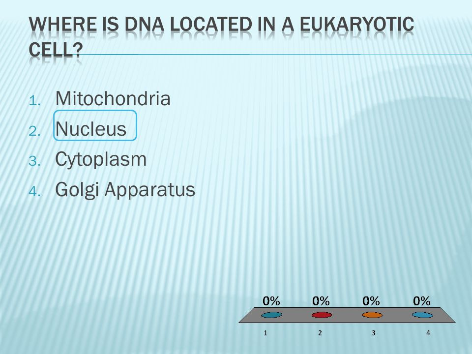 Where is dna located in a eukaryotic cell