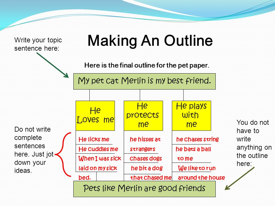 Here is the final outline for the pet paper.