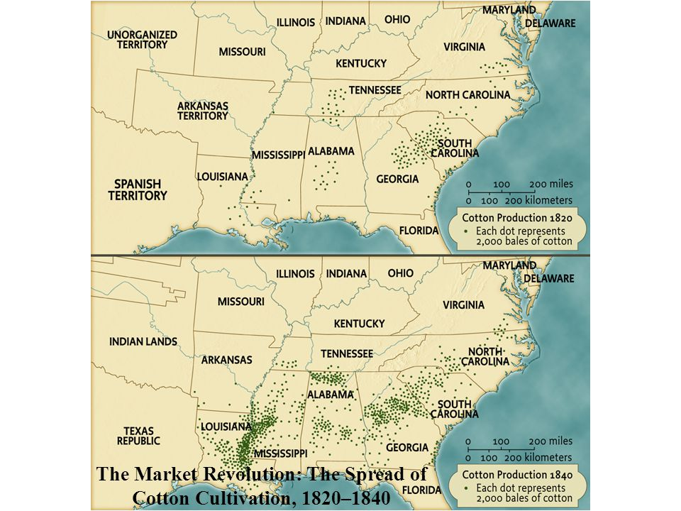 The Market Revolution: The Spread of Cotton Cultivation, 1820–1840