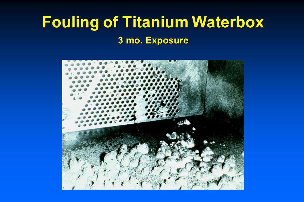 Fouling of Titanium Waterbox 6 mo. Exposure