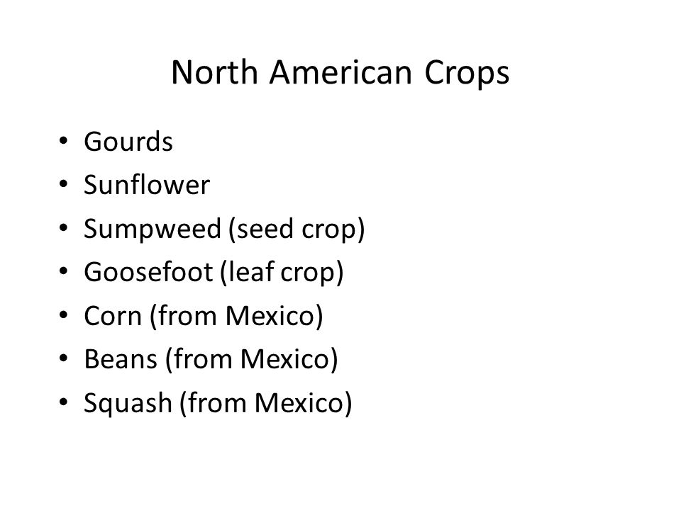 North American Crops Gourds Sunflower Sumpweed (seed crop)