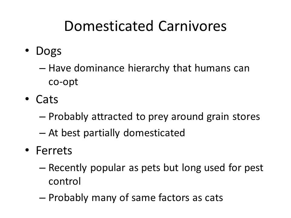 Domesticated Carnivores