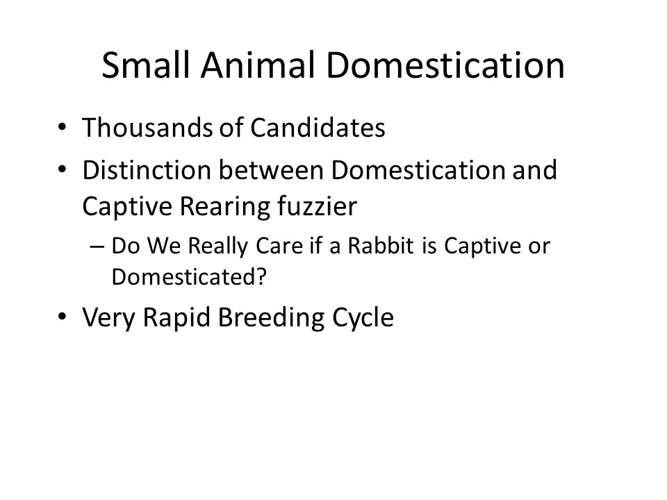 Small Animal Domestication