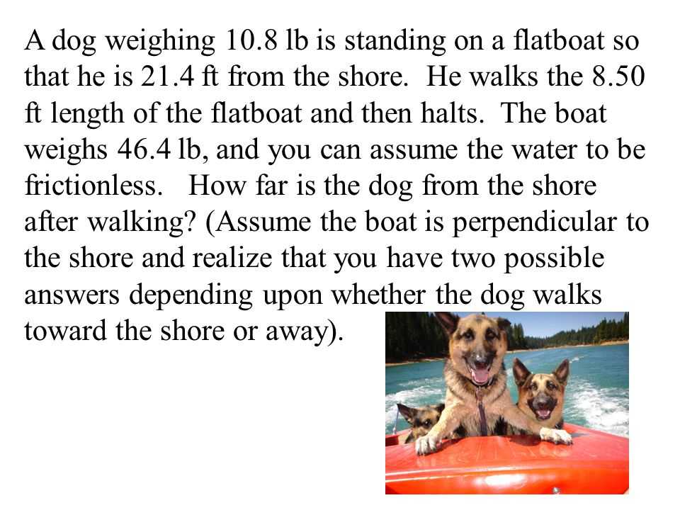 A dog weighing 10. 8 lb is standing on a flatboat so that he is 21