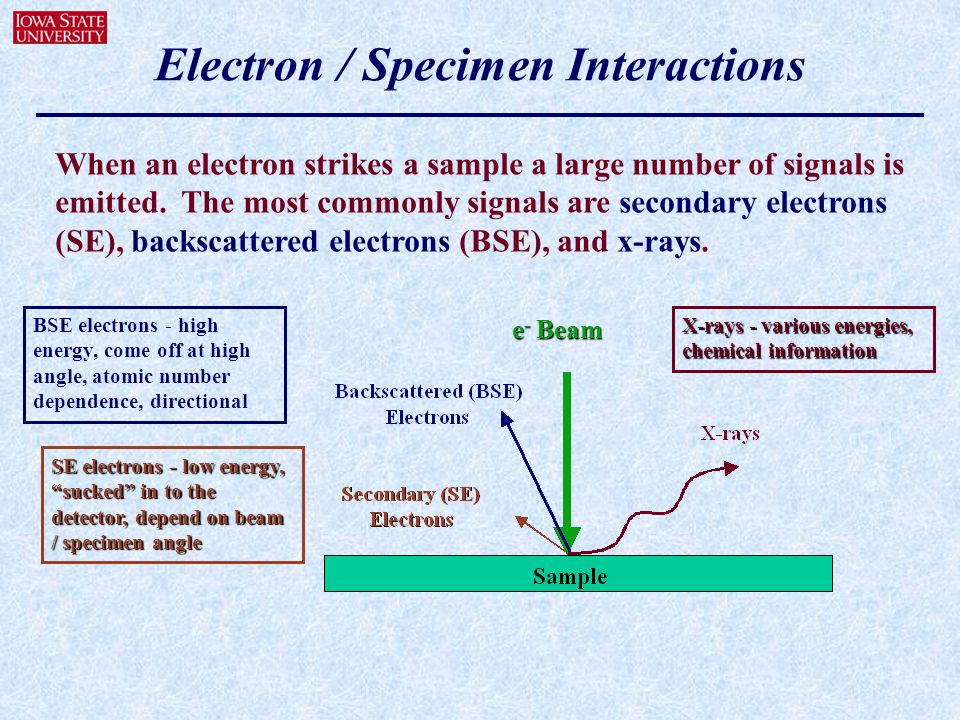 Electron / Specimen Interactions