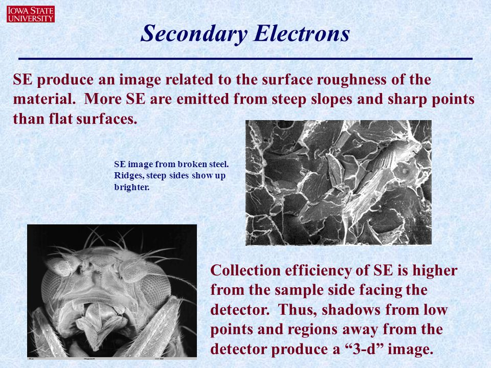 Secondary Electrons