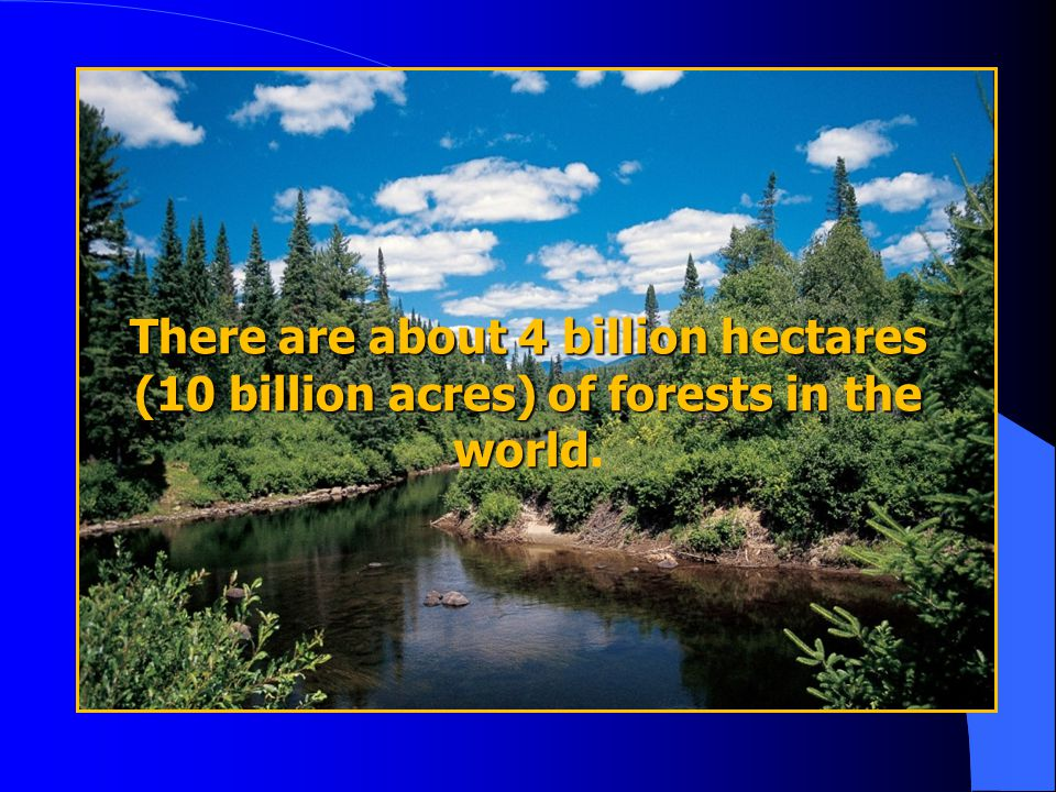 There are about 4 billion hectares (10 billion acres) of forests in the world.