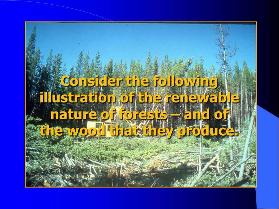 Consider the following illustration of the renewable nature of forests – and of the wood that they produce.