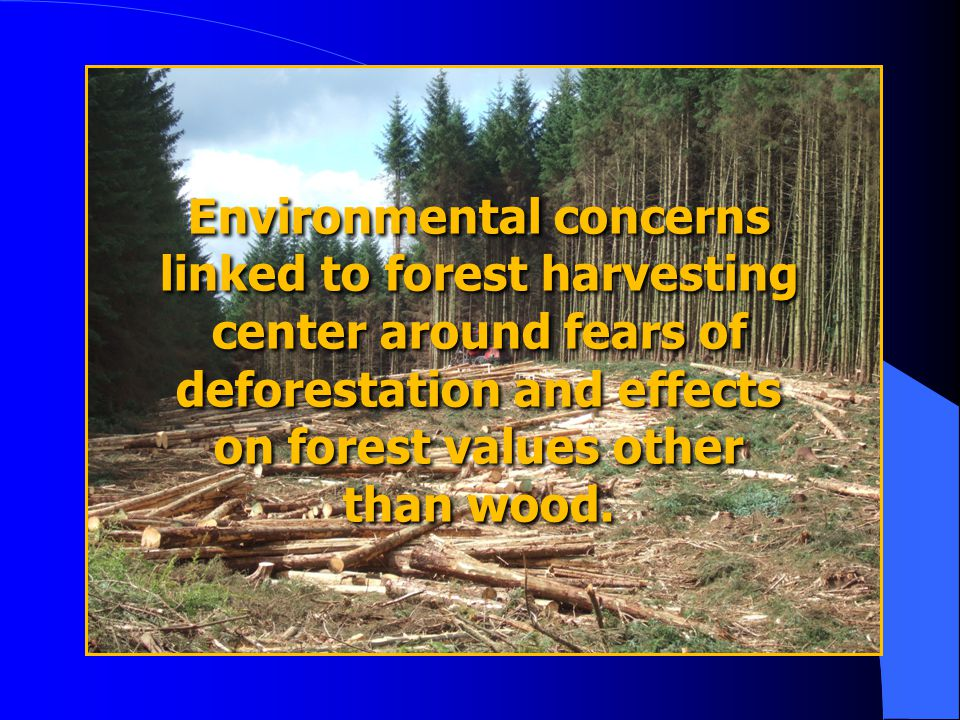 Environmental concerns linked to forest harvesting center around fears of deforestation and effects on forest values other than wood.