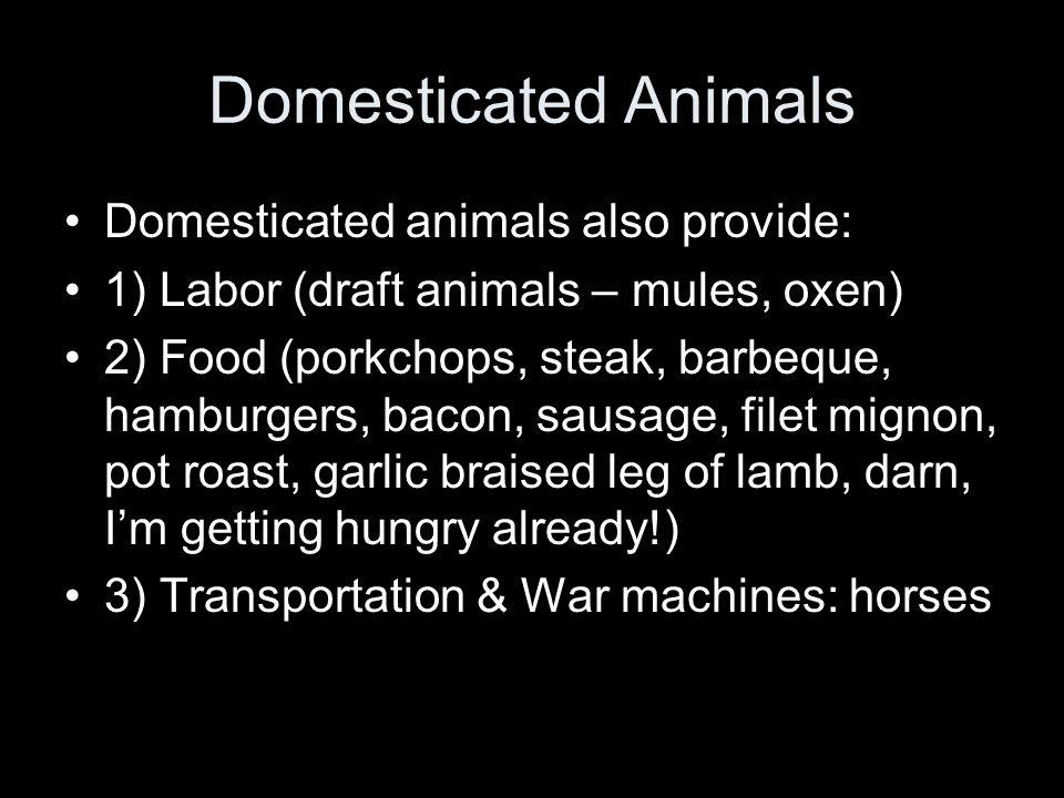 Domesticated Animals Domesticated animals also provide: