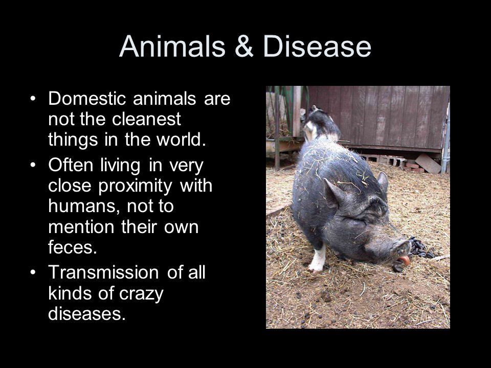 Animals & Disease Domestic animals are not the cleanest things in the world.
