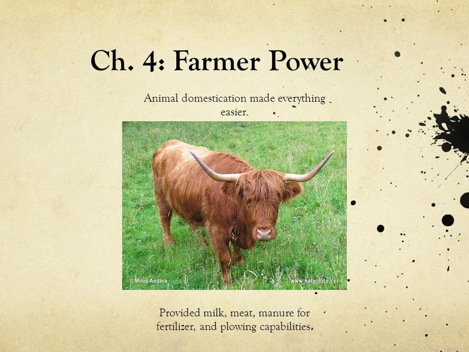 Ch. 4: Farmer Power Animal domestication made everything easier.