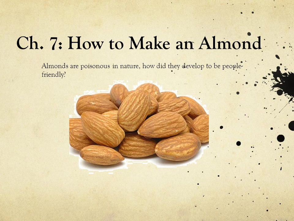 Ch. 7: How to Make an Almond