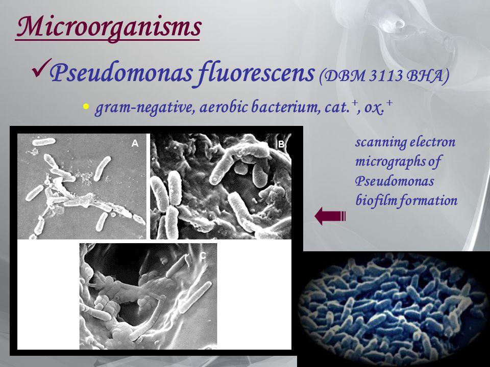 Microorganisms Pseudomonas fluorescens (DBM 3113 BHA)