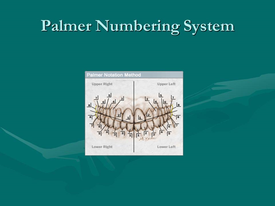 Palmer Numbering System