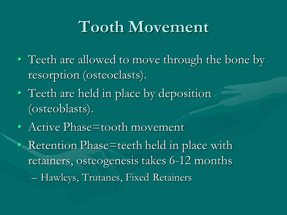 Tooth Movement Teeth are allowed to move through the bone by resorption (osteoclasts). Teeth are held in place by deposition (osteoblasts).