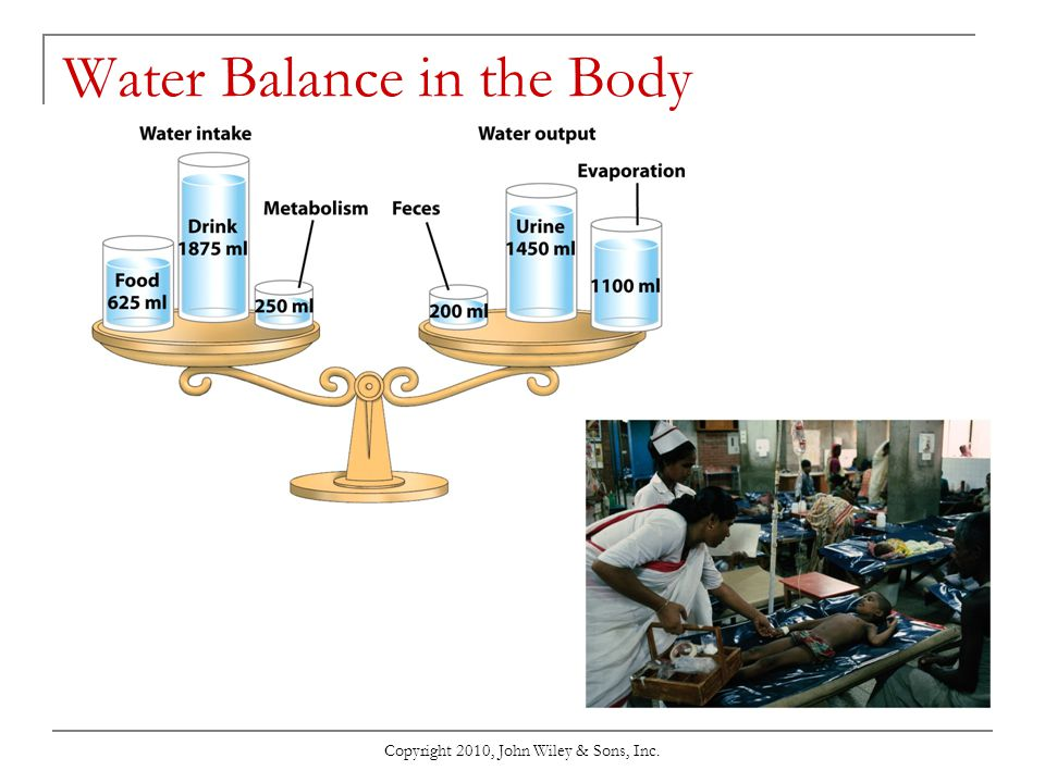 Water Balance in the Body