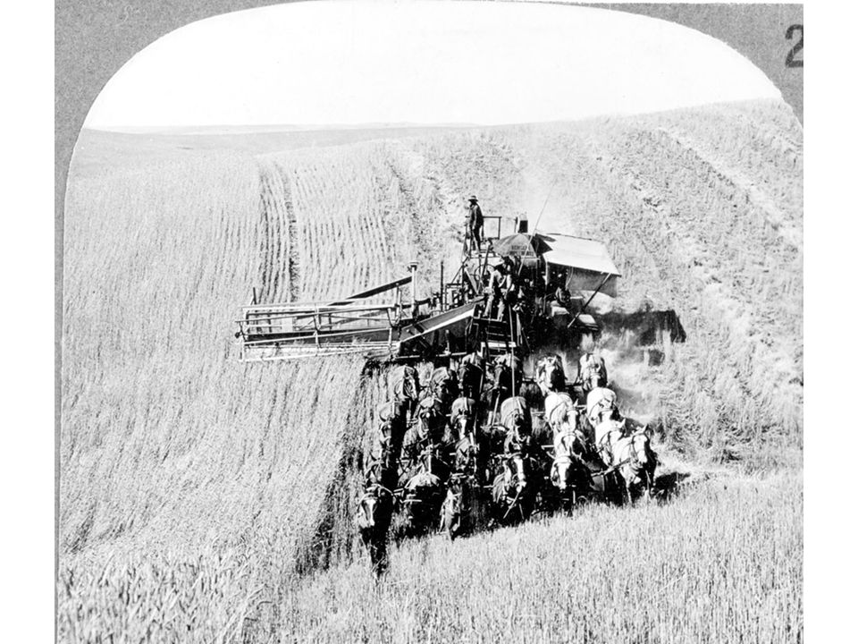 fig16_13.jpg Page 605: A combined reaper-thresher harvests wheat on a western bonanza farm, in a photograph from around 1890.