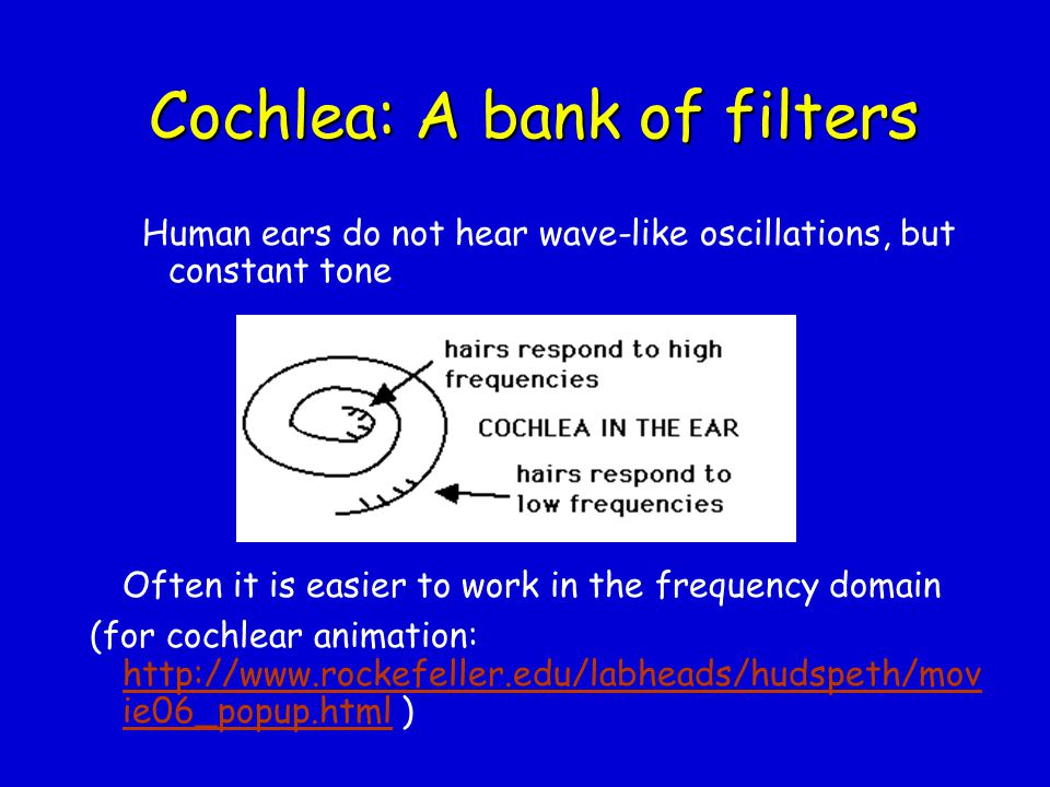 Cochlea: A bank of filters