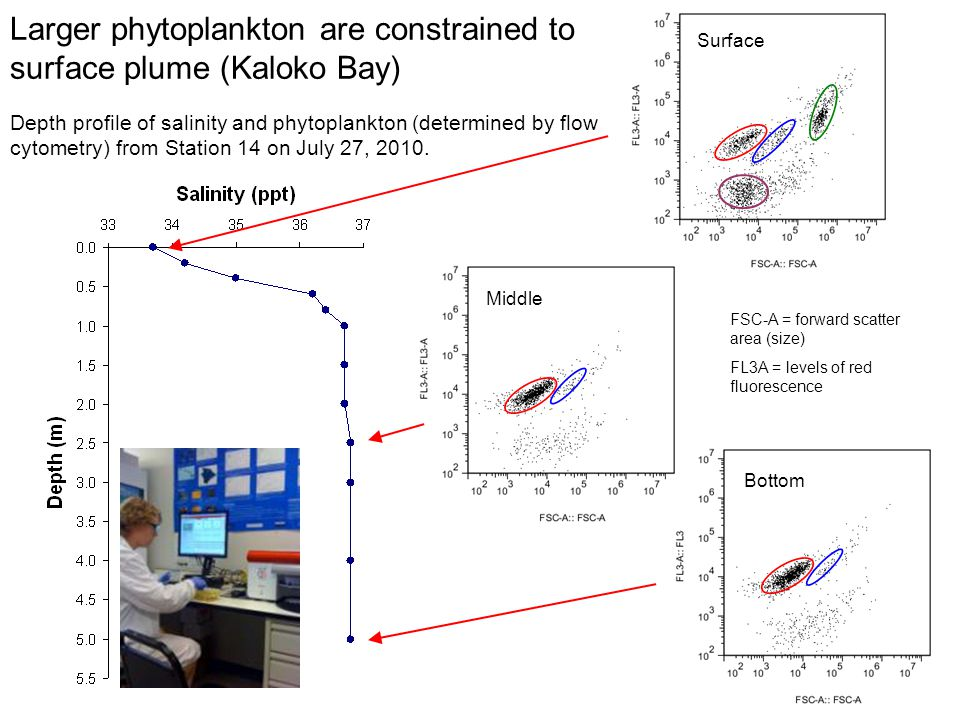 Larger phytoplankton are constrained to surface plume (Kaloko Bay)