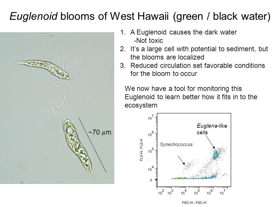 Euglenoid blooms of West Hawaii (green / black water)
