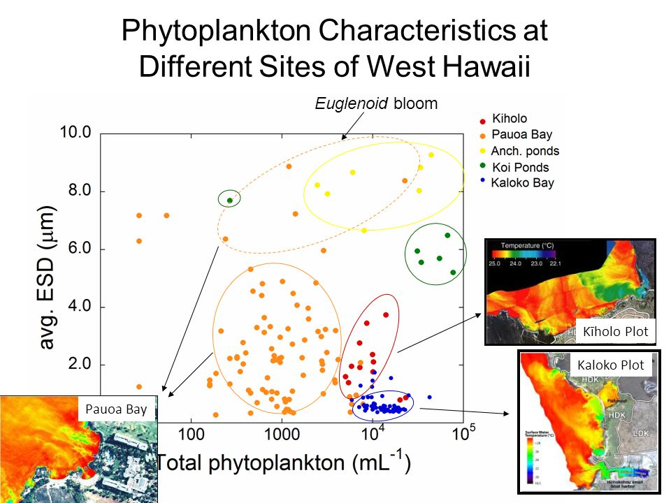 Phytoplankton Characteristics at Different Sites of West Hawaii