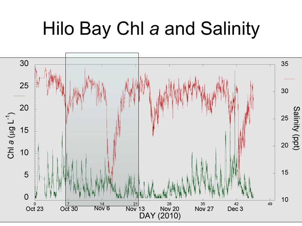 Hilo Bay Chl a and Salinity