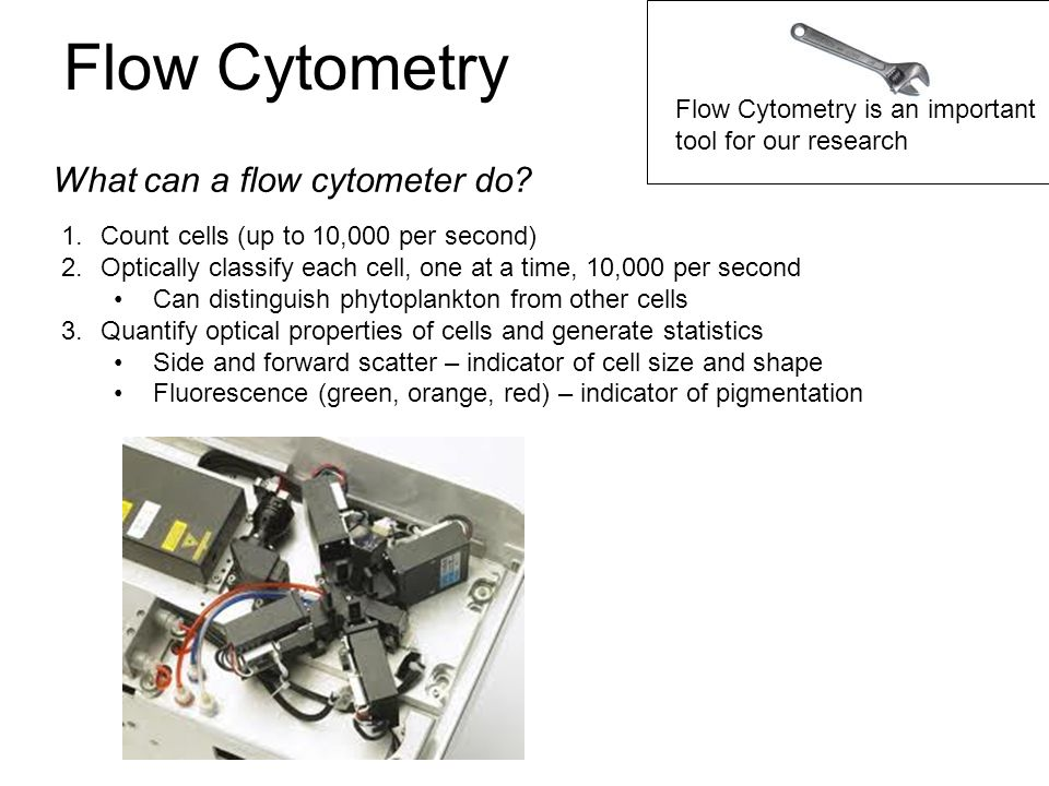 Flow Cytometry What can a flow cytometer do