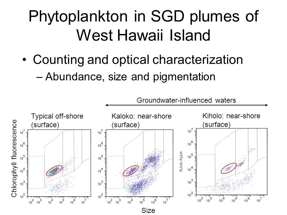 Phytoplankton in SGD plumes of West Hawaii Island