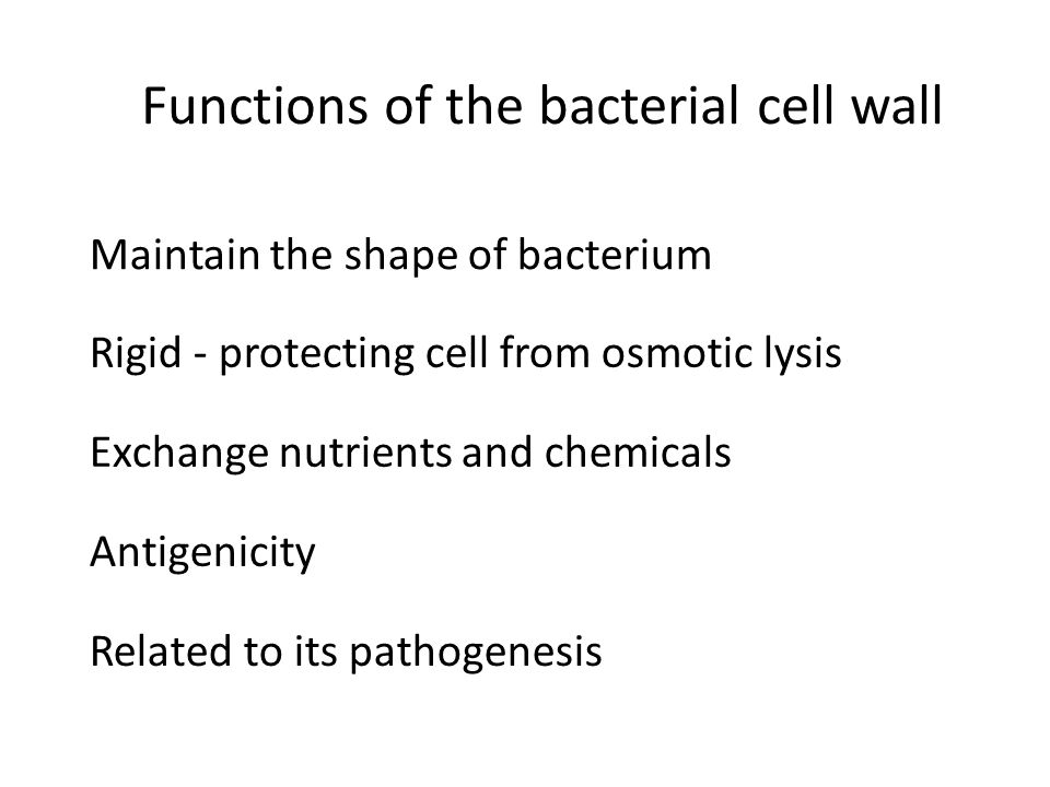 Functions of the bacterial cell wall