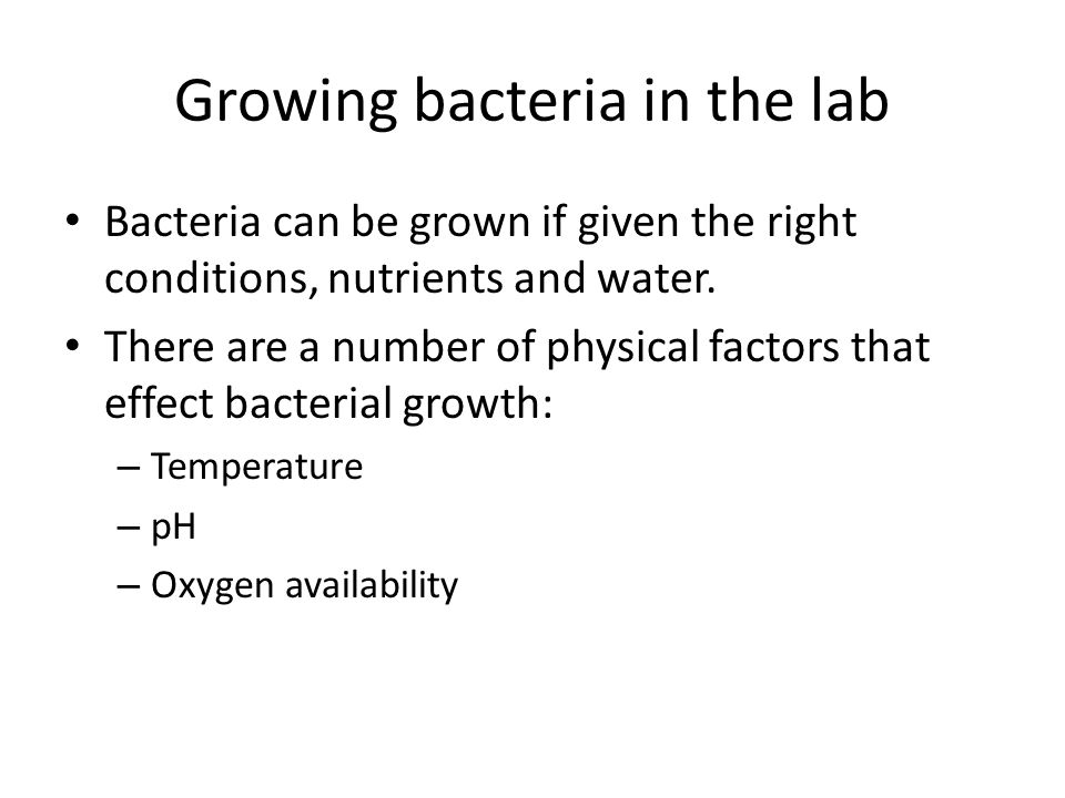 Growing bacteria in the lab