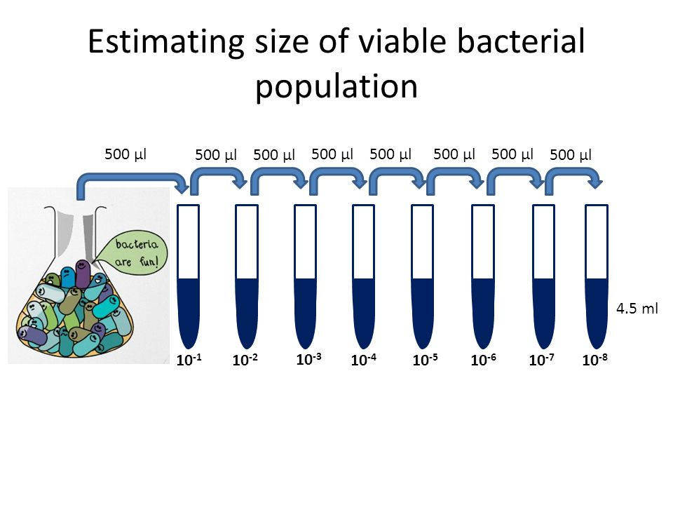 Estimating size of viable bacterial population
