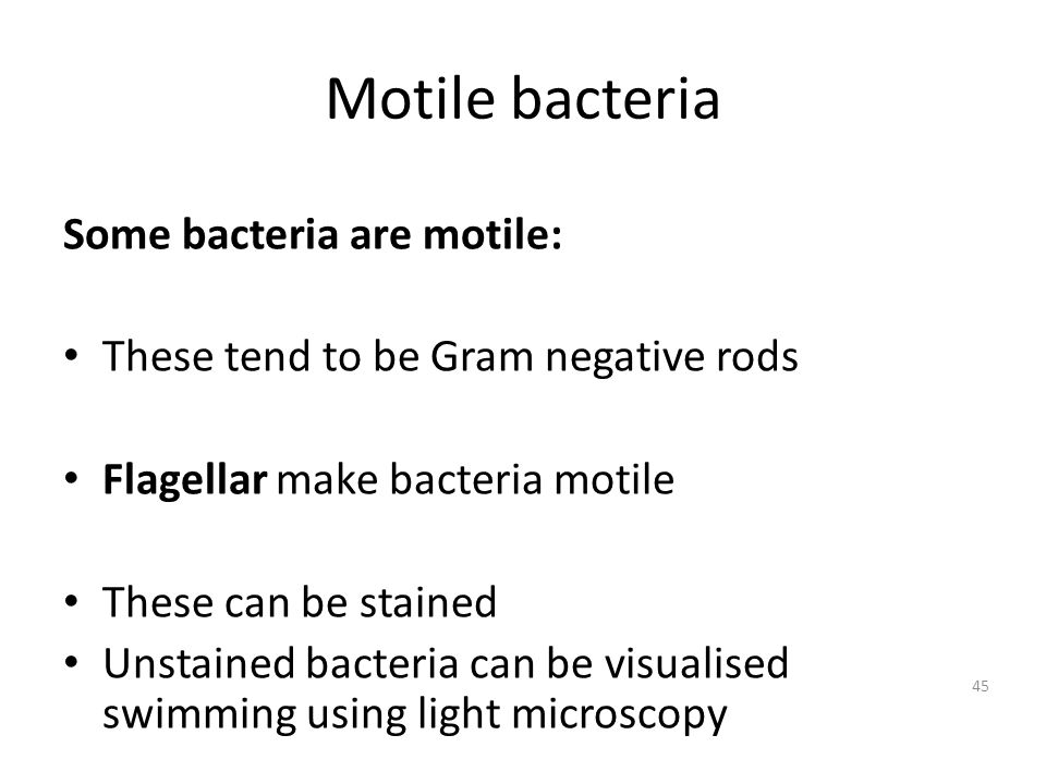 Motile bacteria Some bacteria are motile: