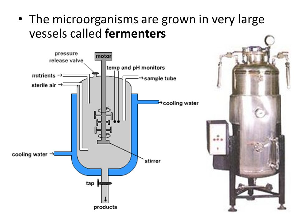 The microorganisms are grown in very large vessels called fermenters