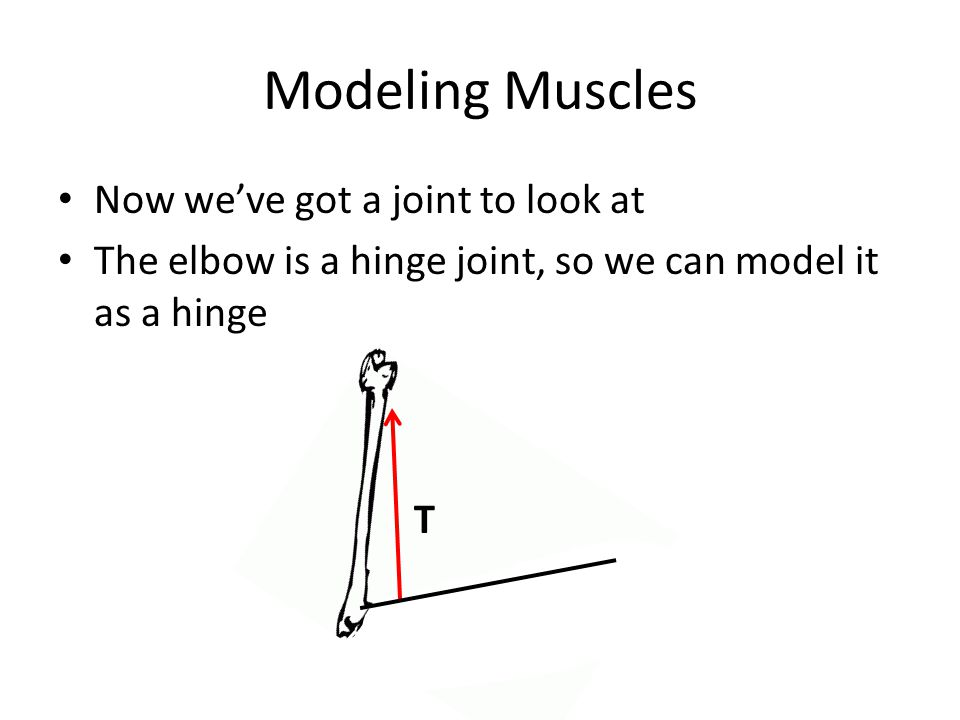 Modeling Muscles Now we've got a joint to look at