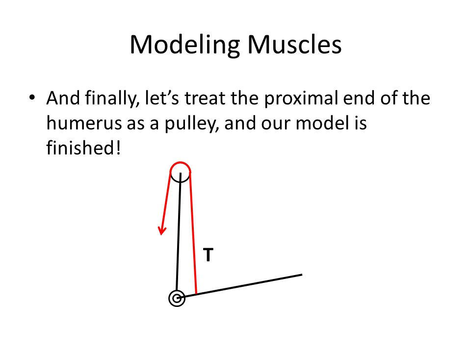 Modeling Muscles And finally, let's treat the proximal end of the humerus as a pulley, and our model is finished!