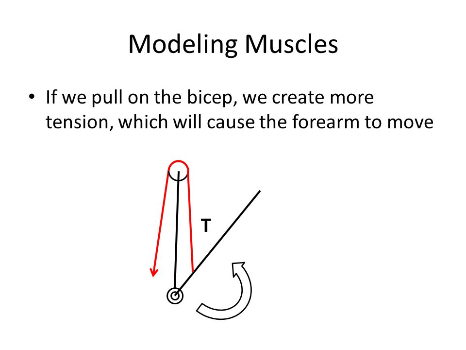 Modeling Muscles If we pull on the bicep, we create more tension, which will cause the forearm to move.