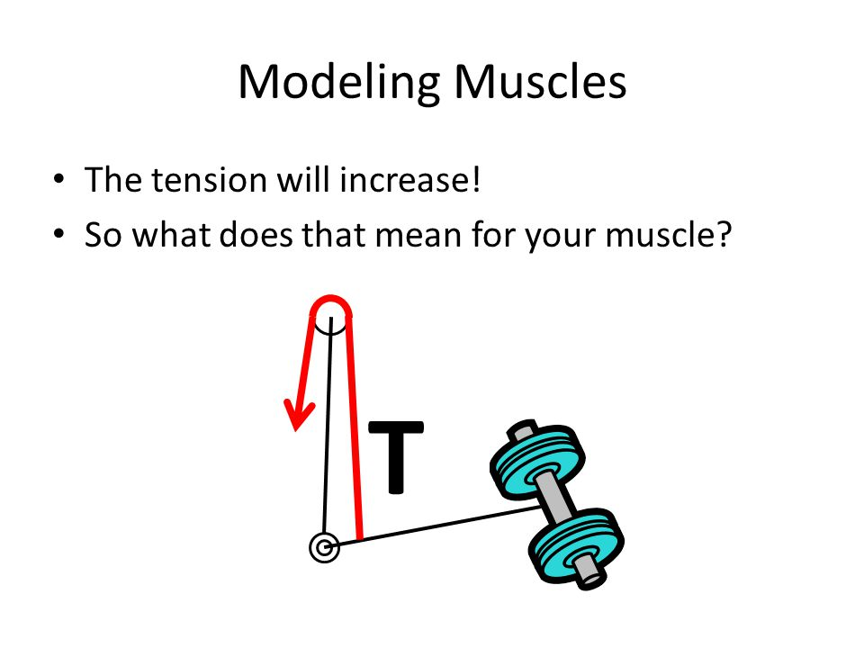 T Modeling Muscles The tension will increase!
