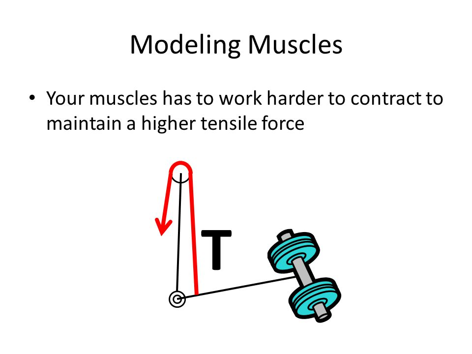 Modeling Muscles Your muscles has to work harder to contract to maintain a higher tensile force T