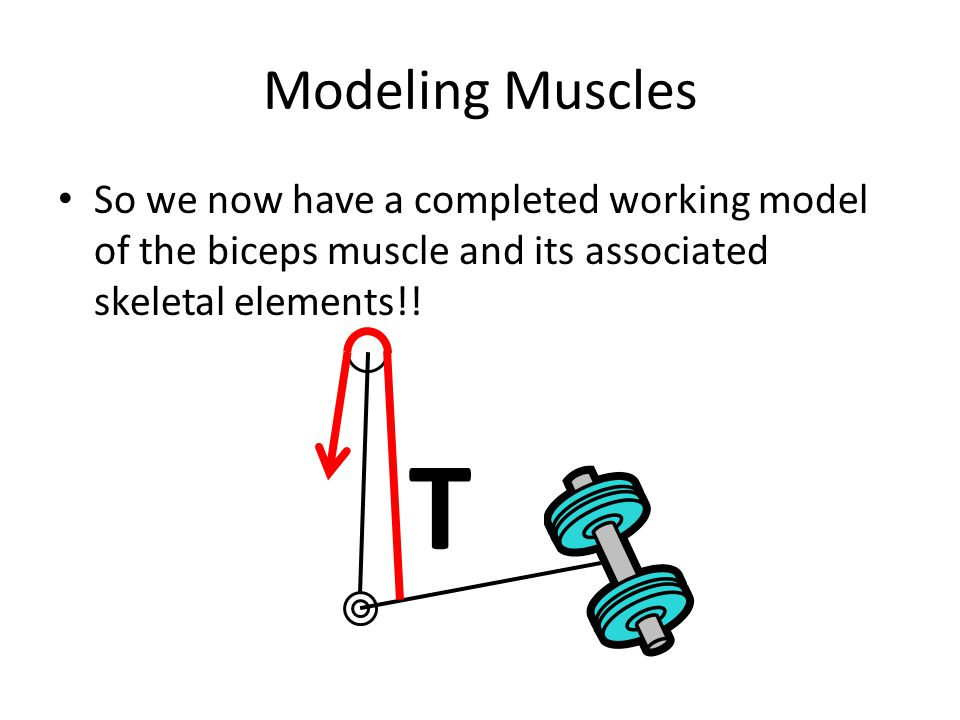 Modeling Muscles So we now have a completed working model of the biceps muscle and its associated skeletal elements!!