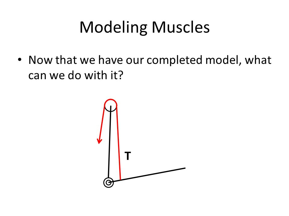Modeling Muscles Now that we have our completed model, what can we do with it T